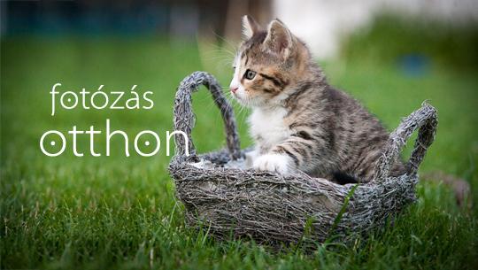 állat fotós, állatok fotózása, házikedvenc képek, állatportrék 4